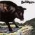 Bull Angus (Vinyl)
