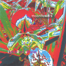 moonflowers I