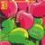 Apple Bobbing (EP)