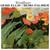 Windflower (Vinyl)